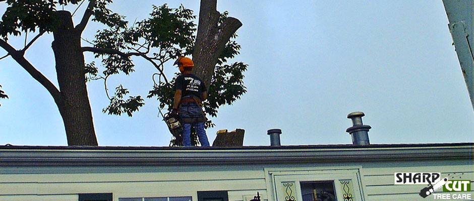 Sharp-Cut-Tree-Care2
