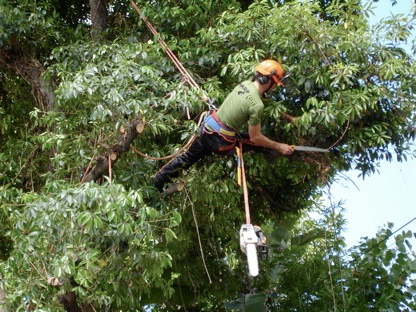 sharpcut tree care tree pruning