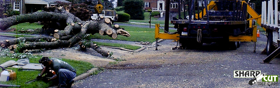 sharp cut tree care